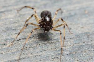 araña macro en el suelo