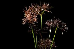 flores silvestres sobre un fondo negro