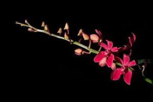 Pink flower on black background