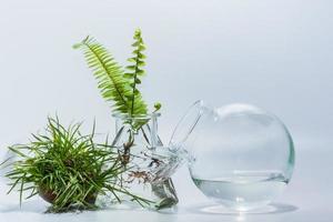 Terrarium plants on white background