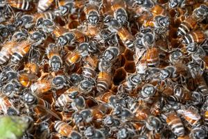 Macro bee nest