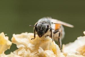 close-up van bijen in bijenkorf