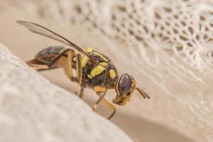 Macro of Drosophila Melanogaster