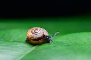 Snail on a leaf photo