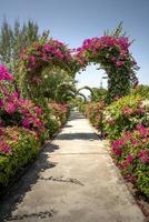 jardín con arco de corazón de flores