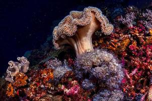 arrecife de coral marrón bajo el agua foto