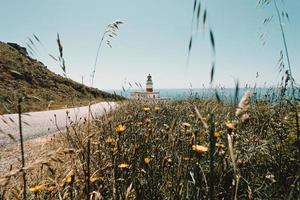 Field of flowers and red lighthouse photo