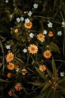 flores blancas y amarillas