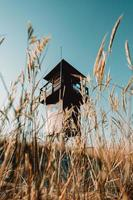 Wheat and lifeguard tower