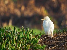 pájaro blanco en pasto