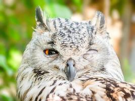 Close-up of winking owl