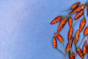 Red dried chili peppers on blue background photo