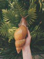 Person holding a snail