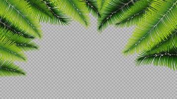 Frame made of palm leaves in a realistic style vector