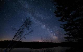 Trees under starry sky photo