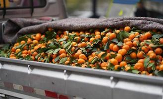 manojo de naranjas