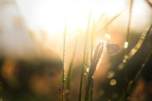 sun drenched butterfly approaches tall grass photo