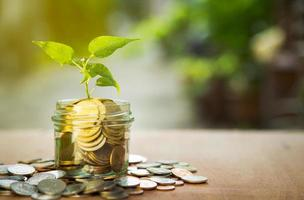 Plant stem in coin jar, finance concept
