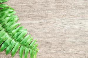 Fern leaf on wooden background photo