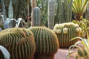 Desert cactus and succulent plant