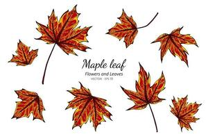 Hand drawn maple leaf collection