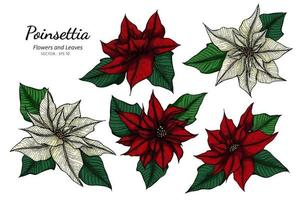 Hand drawn poinsettia flower and leaves set