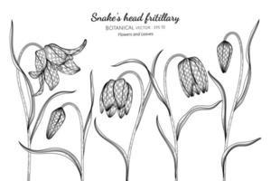 Hand drawn snake's head fritillary flower
