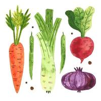 Watercolor carrot, pea, radish, onion, leek set vector