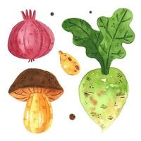 Watercolor onion, mushroom, radish, pumpkin seed set