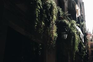 Potted vine plants