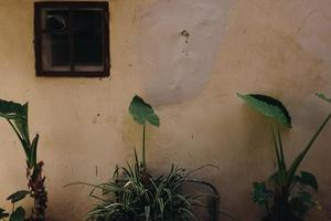 Green plants near wall