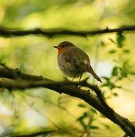 Small bird on tree branch