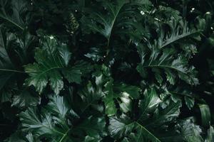 planta de folha verde foto