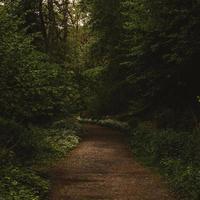 camino de tierra marrón