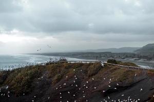 Seagulls on coast under cloudy sky
