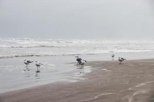 Seagulls on seashore