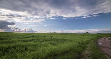 Bright green grass field photo
