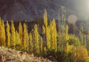 escena de otoño de la luz del sol de la mañana iluminada álamos