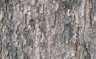 Textured tree bark photo