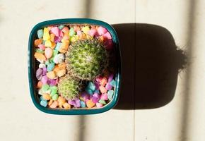 Green cactus plant in gray pot