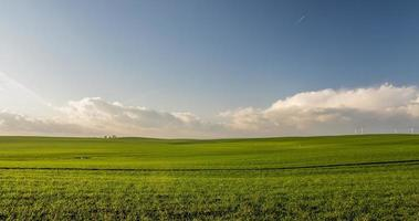Green grassy field with blue sky