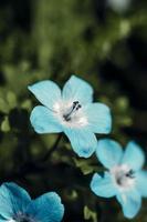 Blue flower in tilt shift lens photo