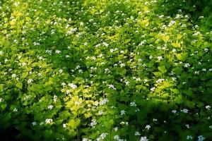 flores brancas no chão
