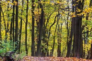 forêt en automne photo