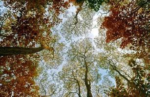 árboles coloridos en un bosque de otoño