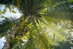 zonnige palmbomen