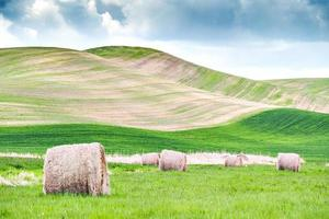 Hay rolls on green and brown grass field photo