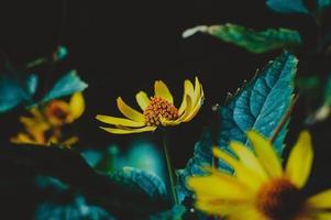 fotografía selectiva de flor amarilla