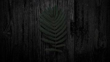 folhas verde escuro foto