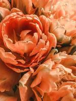 Orange flowers in macro photo